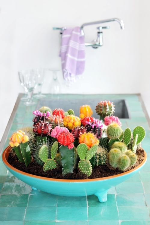 How to create an indoor flowering cactus garden reclaiming your castle spring is all about flowers but keeping fresh flowers in the house all the time can get expensive enter the indoor desert oasis of the mini cactus garden mightylinksfo