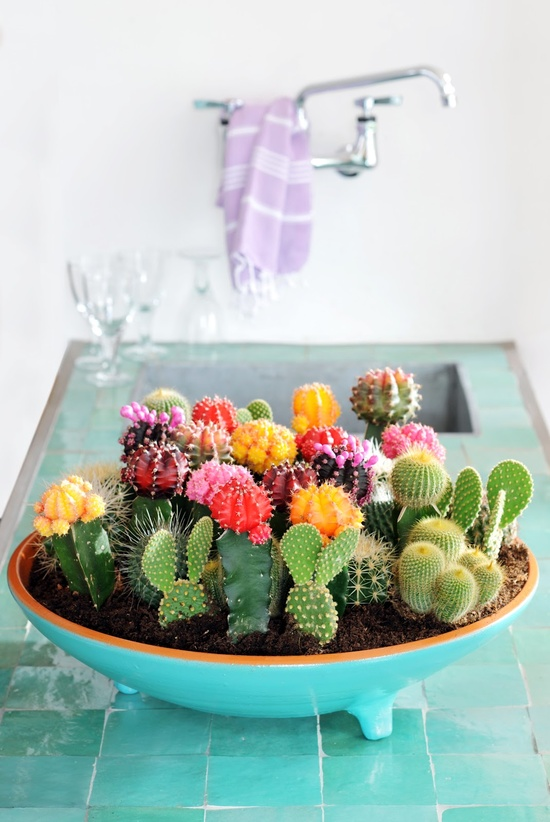 Incroyable Spring Is All About Flowers But Keeping Fresh Flowers In The House All The  Time Can Get Expensive! Enter The Indoor Desert Oasis Of The Mini Cactus  Garden.