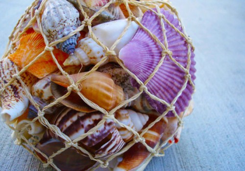 Sea Shell; Supply / Esty